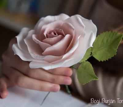 cukor rózsa